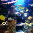Colorful and vibrant aquarium life - Stock Photo