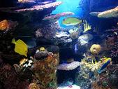 Colorful and vibrant aquarium life — Stock Photo