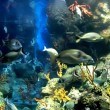 Colorful and vibrant aquarium life — Stock Photo #7061011