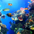 Colorful and vibrant aquarium life — Stock Photo #7061018