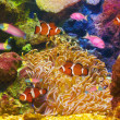 Stock Photo: Colorful and vibrant aquarium life