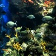 Colorful and vibrant aquarium life — Stock Photo #7287023