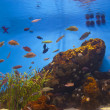 Colorful and vibrant aquarium life — Stock Photo #7566388