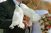 Pigeons and the bride and groom — Stock Photo