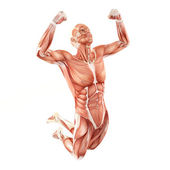 Man muscles anatomy system isolated on white background. Jump pose — Stock Photo