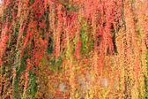 Hanging garden — Stock Photo