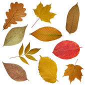 Yellow beautiful leaves — Stock Photo