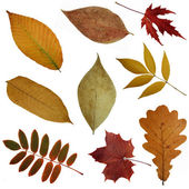 Some autumn leaves — Stock Photo