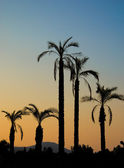 Palms silhouette — Stock Photo