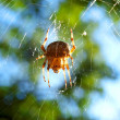 Stock Photo: Spider on web