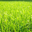 Green cut grass — Stock Photo