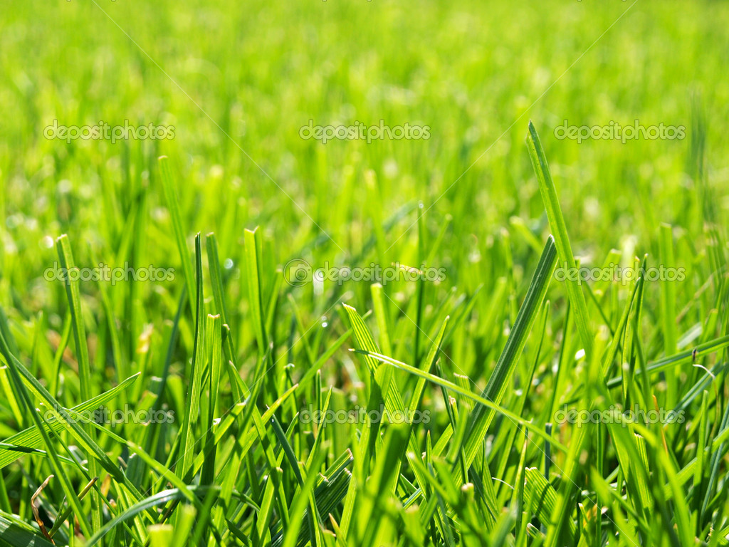 Background from a bright green grass  — Stock Photo #6886168
