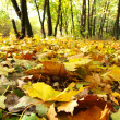 The fallen down autumn leaves — Foto Stock