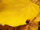 The fallen down autumn leaves — Stock Photo