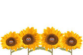 Four isolated funny sunflowers — Stock Photo