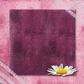 Fundo rosa romântico com uma margarida — Fotografia Stock