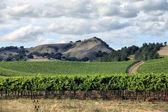 Wijngaard van napa in californië. — Stockfoto