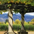 Stock Photo: Vineyard Napin California.