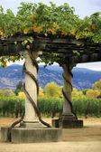 Napa de vinhedo na califórnia. — Foto Stock