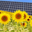 Panel solar and sunflowers — Stock Photo #6904466