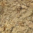 Stock Photo: Manure, fertilizer for plants