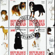 Stamp shows different dog breeds — Stock Photo