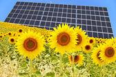 Painel solar e girassóis — Foto Stock