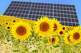 Panel solar and sunflowers — Stock Photo
