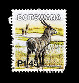 Stamp shows image of a water-buck/letimoga — Stock Photo