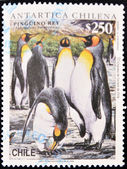 Stamp shows a group of king penguins in the Antarctic Chilean — Stock Photo