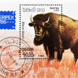 Stamp shows a bison - Stock Photo