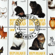 Stamp Shows different types of cats — Stock Photo