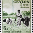 Stamp shows Three women in the rice field, — Stock Photo