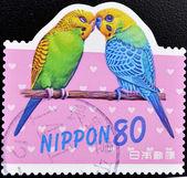 戳显示两个鹦鹉 — 图库照片
