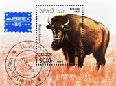 Stamp shows a bison — Stock Photo