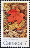 Stamp shows image of a maple leaf in autumn — Stock Photo