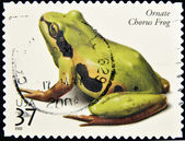 Stamp shows a ornate chorus frog — Stock Photo