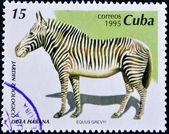 Stamp shows a zebra — Stock Photo