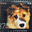 Stamp shows image dog — Stock Photo