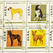 Stamp showing different breeds of dogs — Foto Stock