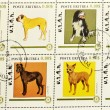 Stamp showing different breeds of dogs — Foto de Stock