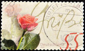 Stamp shows a Rose — Stock Photo