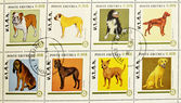 Stamp showing different breeds of dogs — Stock Photo