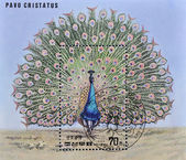 Stamp shows a pavo cristatus — Stock Photo