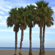 Palms on the beach. Natural Park Cabo de Gata — Foto Stock