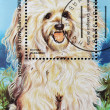 Stamp shows a dog, Havanese - Stock Photo