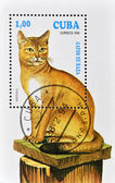 Stamp shows Abyssinian cat — Stock Photo