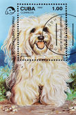 Stamp shows a dog, Havanese — Stock Photo