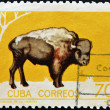 CUBA - CIRCA 1970: A stamp printed in Cuba shows a bison, circa 1970 - Stock Photo