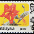 Stock Photo: MALAYSIA-CIRC1985:stamp printed in Malaysishows Hibiscus ros- sinensis, circ1985.